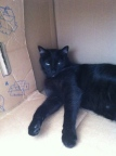 Diesel keeping cool in a cardboard box as you do!