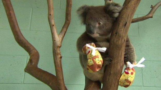 australians-mittens-koalas-brushfires