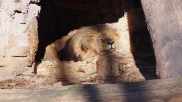 El Rey, sleeping