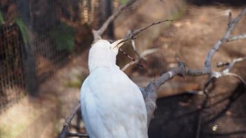 White bird building nest
