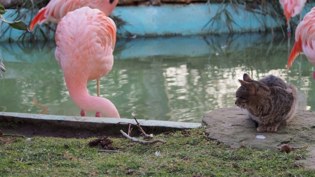 A flamingo and a cat