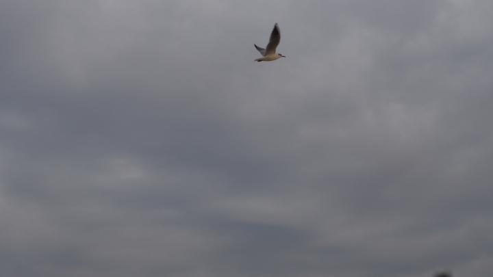 Seagull Barceloneta