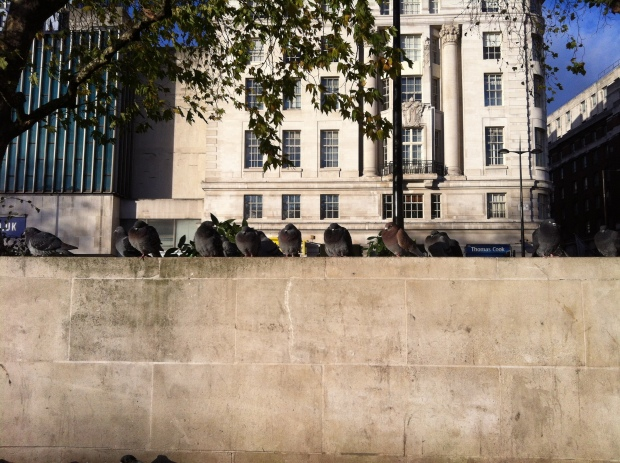 Pigeons, Marble Arch