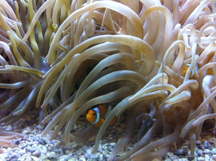 Nemo! Monaco Aquarium