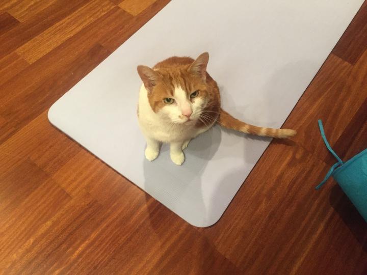 My mat! No! My mat!