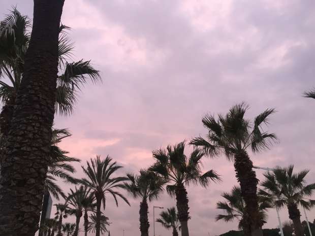 Lilac Lavender Sunset