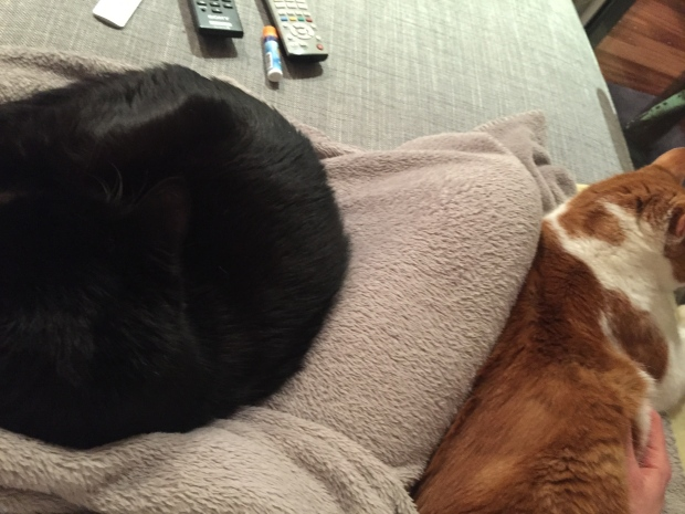 Caturday Snuggles
