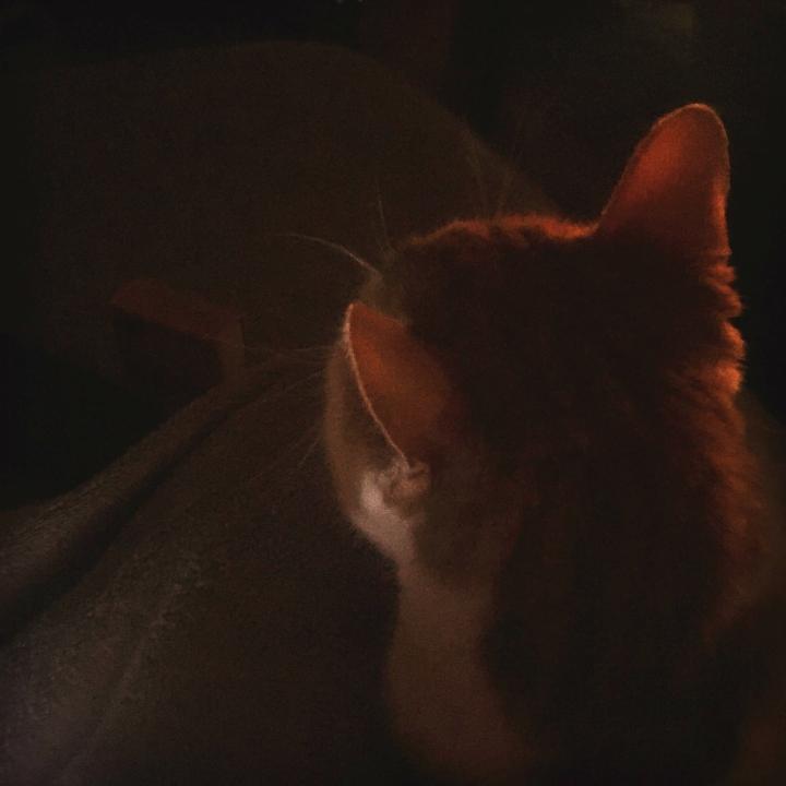 Earth Hour Cat snuggles