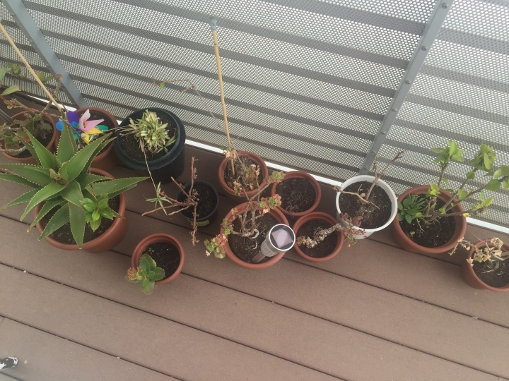 Plants before