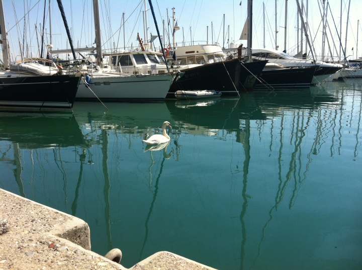 Swan Antibes