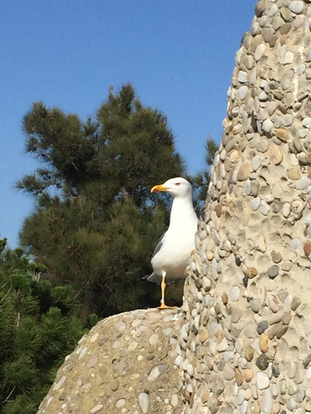 Seagull barcelona zoo