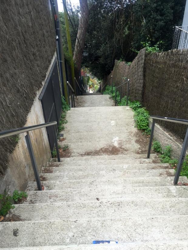 Steps, Parc Collserola, Barcelona Zoo