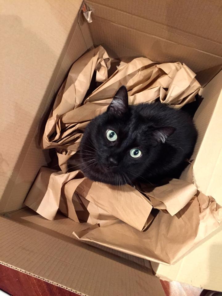 D loves boxes