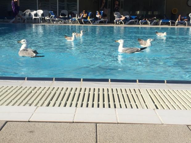 Seagull Barcelona