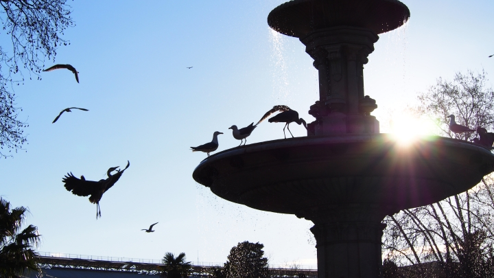 Seagulls and Herons, Barcelona, Zoo