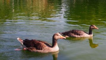 Boating lake, Parc de la Ciutadella