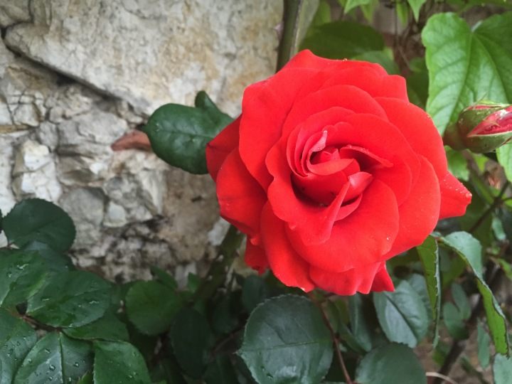 Rose, Eze Village