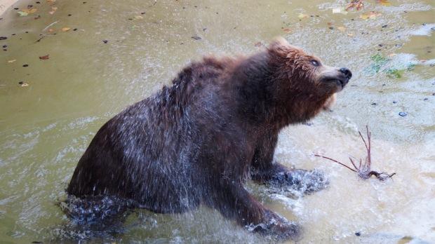 Oso/Bear Barcelona Zoo