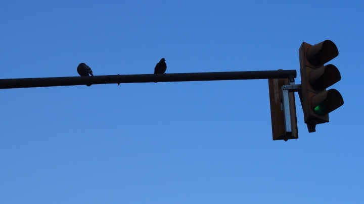 traffic lights, pigeon and sky