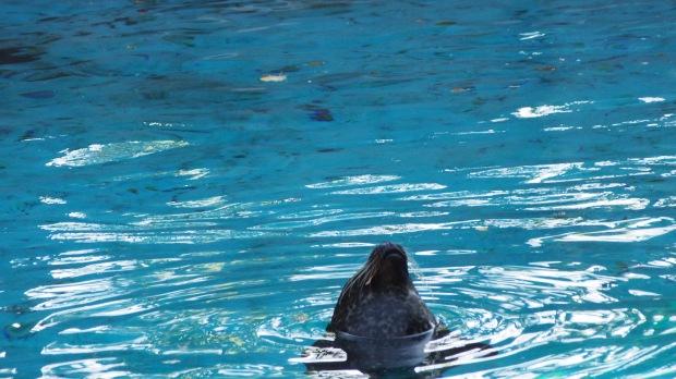 Seal, Barcelona Zoo