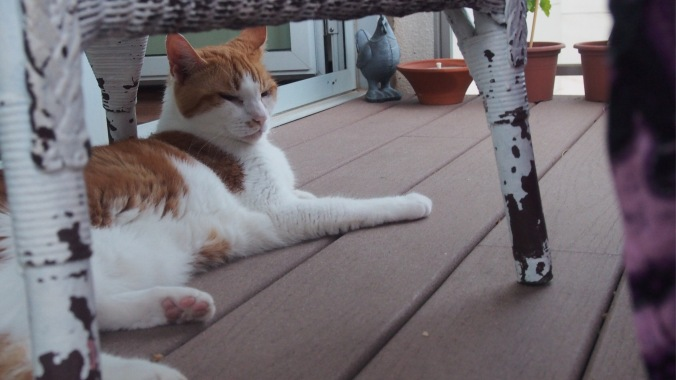AJ keeping cool on the balcony