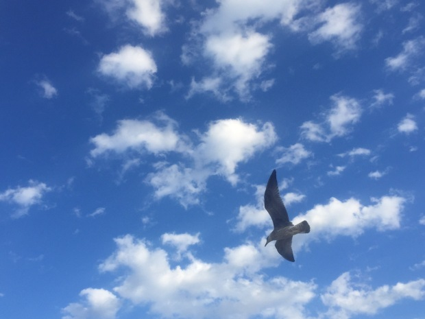 Seagull and wind