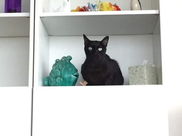 Diesel. Cat decor, living art