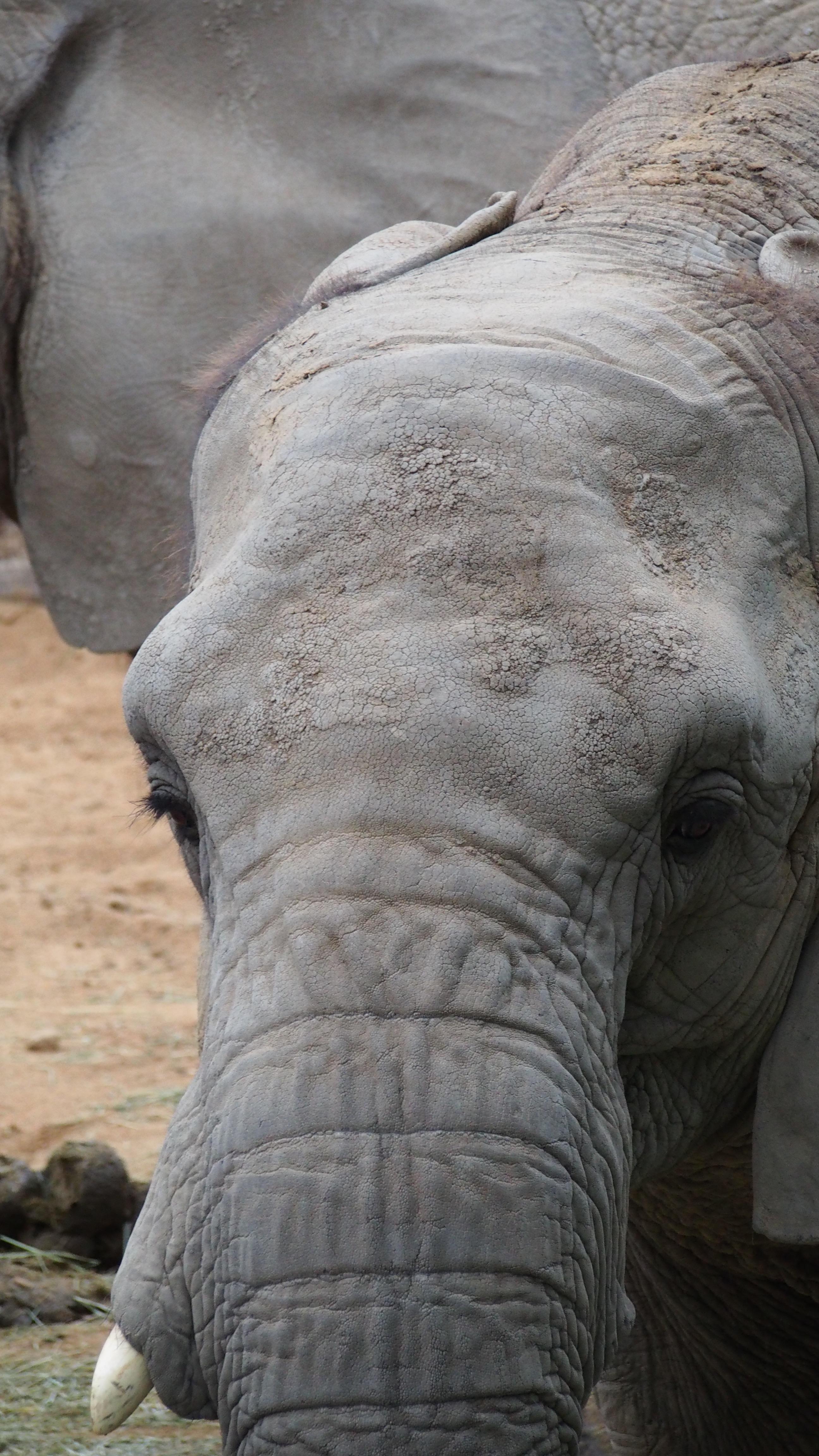 Happy belated world elephant day natjtan for Elephant barcellona
