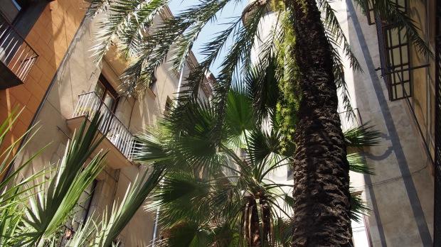 Palm trees Placeta de Montcada