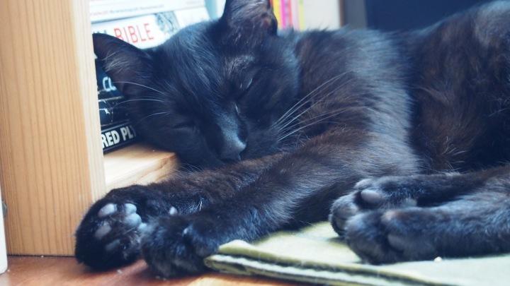 Diesel World Cat Day
