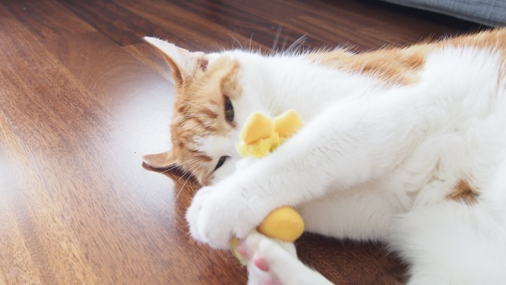 Aj and Kongs refillable catnip duck toy