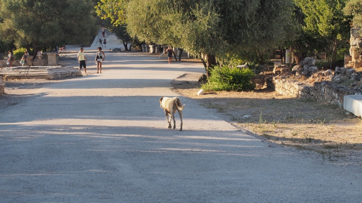 Street Dog at the Ancient Agora