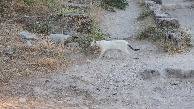 Cat Ancient Agora
