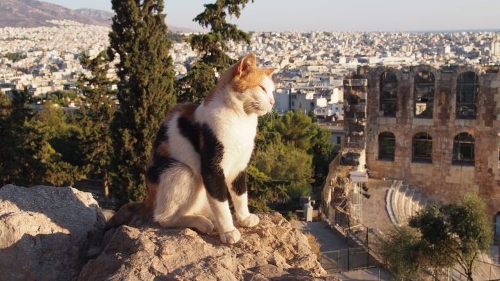 Cat at the Acropolis