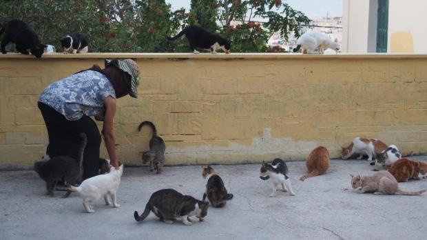 Feeding cats near the Acropolis
