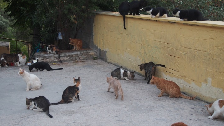 Feeding cats near the Acropolis