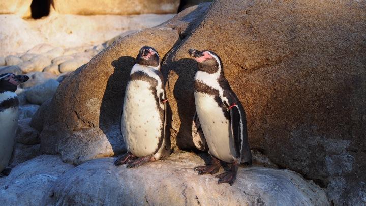 Penguin sun