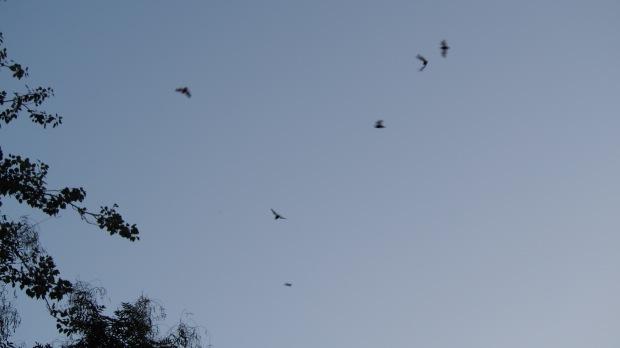 Bats and Dragonflies