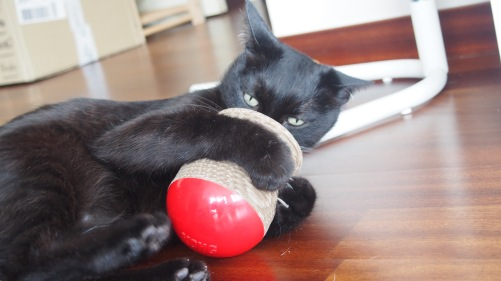 New Kong Toy!