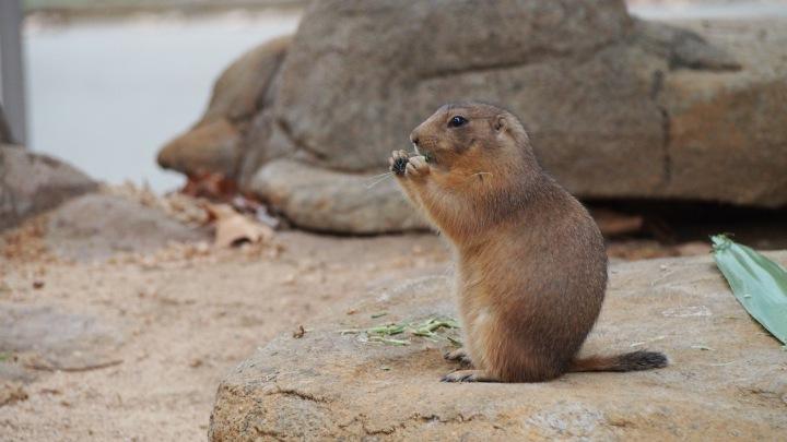 Marmots Barcelona Zoo