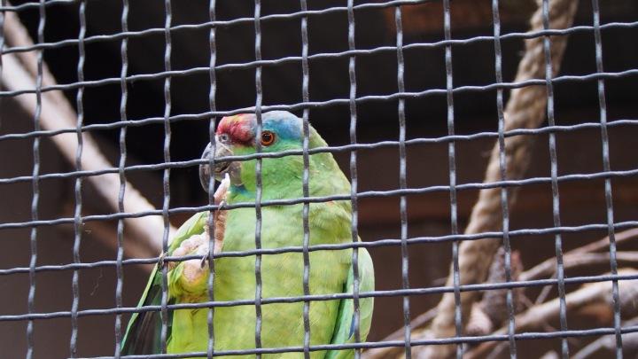 Festive Amazon Barcelona Zoo