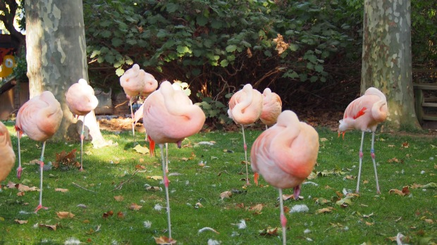 Flamingos Barcelona Zoo