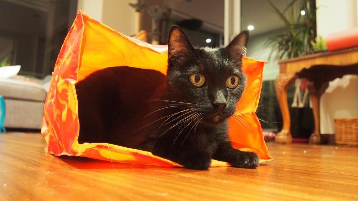 Mr D and his cat friendly bag