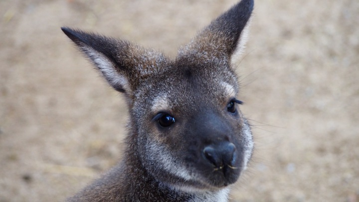 Wallabie Eyelashes
