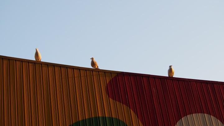 Seagulls Barcelona Zoo