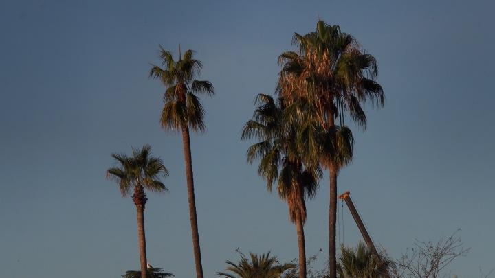 Palm Trees, Barcelona Zoo