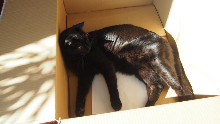 Box. Must sit in it. Diesel
