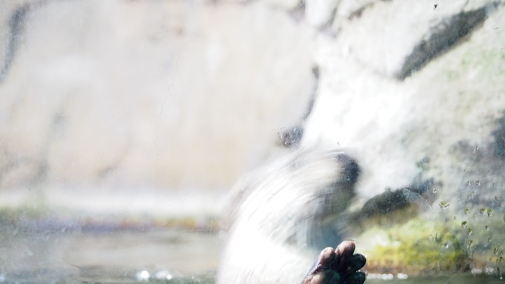 Otter paw, Barcelona zoo