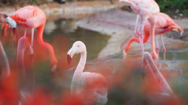 Eye Spy, Flamingo Barcelona Zoo