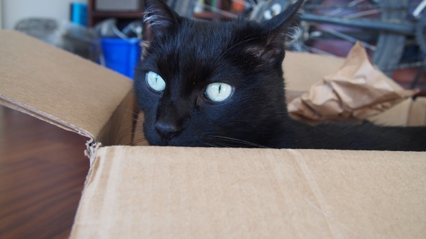 Diesel and his box